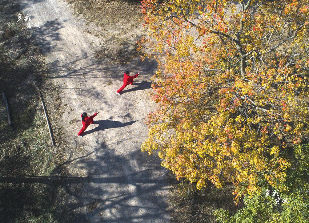 秋风四起,银杏泛黄,枫叶转红,文房四宝之城的宣城,不经意间就美出了新的高度。宛陵湖环湖路两边的梧桐树已初具规模。进入秋季,枝繁叶茂,枝头上的梧桐叶子一点点从绿色变成淡绿色,继而变成鹅黄色,犹如一幅油画。