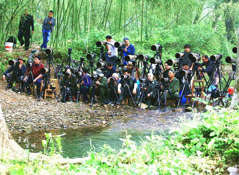 拍鸟队伍。特约摄影记者 胡华余  摄。