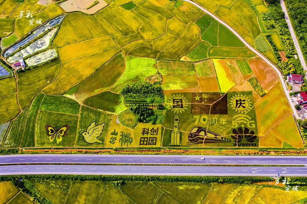 """近日,在宣州区杨柳镇,从空中俯瞰,原本应该是绿油油的稻田却呈现出五彩缤纷的颜色,更奇妙的是,上面还有各种各样的图案,庆祝建国70周年、高铁、5G等不同图案,而组成这些图案的植物,都是水稻。这些彩色水稻,以大地为画布,用彩色水稻为""""颜料"""",绘出了一幅幅别具一格的稻田美景。特约记者 潘华业 摄"""