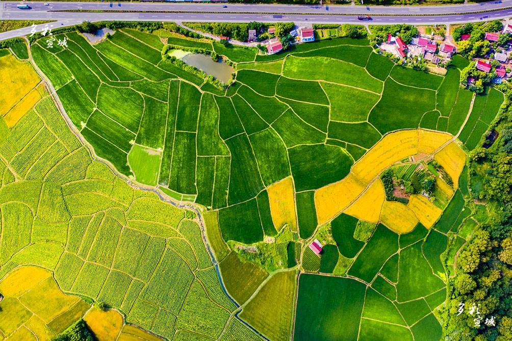 稻田美景。