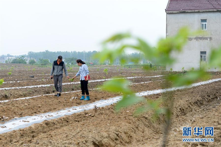(代表委员履职)(1)全国人大代表王萌萌:产业兴旺让乡村振兴更有底气