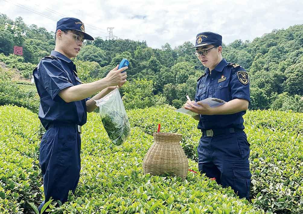 为保障我市茶叶出口质量,连日来,宣城海关关员顶着炎炎烈日前往茶叶主要产区,对出口茶叶备案基地进行现场监管。 汪筱琪 摄