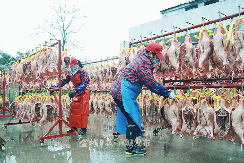 小雪腌菜,大雪腌肉。12月8日,大雪節氣剛過,家家戶戶忙著腌制咸貨。郎溪縣凌笪鄉咸貨加工廠的工人們正在晾曬剛剛腌制的咸鵝,搶抓時令時機,不斷滿足市場需求。 特約記者 夏忠羽 攝